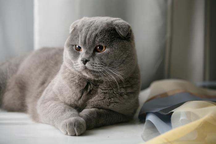 نژاد گربه