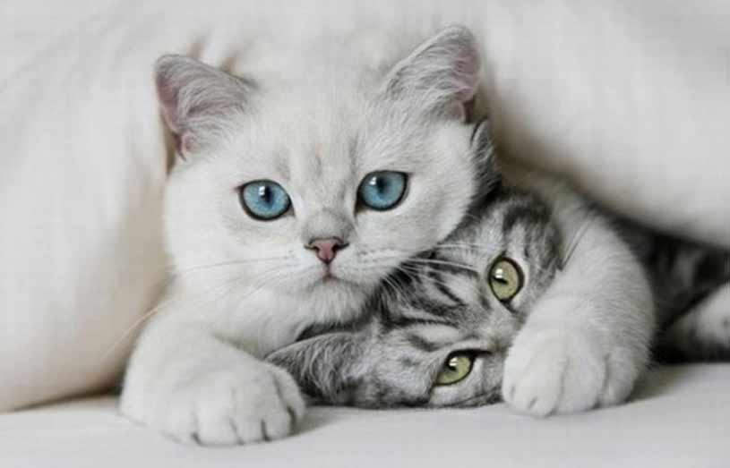 تربیت گربه | نحوه تربیت و آموزش تربیت گربه و اصولی که باید بدانید