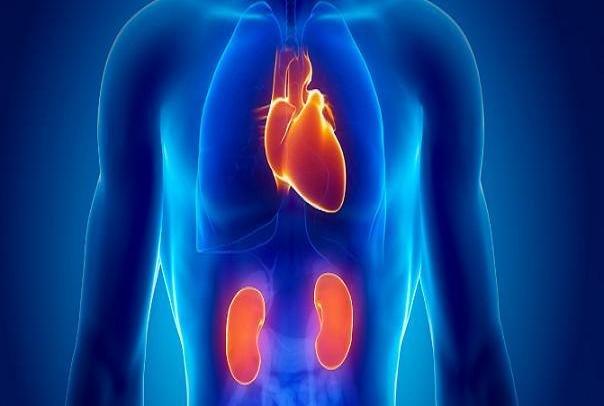 بیماری کلیه و ضربان قلب | آیا بیماری های کلیه باعث افزایش ضربان قلب می شود؟