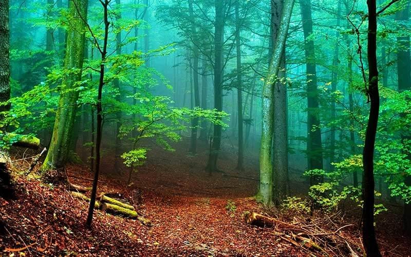 Photo of تعبیر خواب جنگل؛ تعابیر خواب جنگل و گم شدن در جنگل