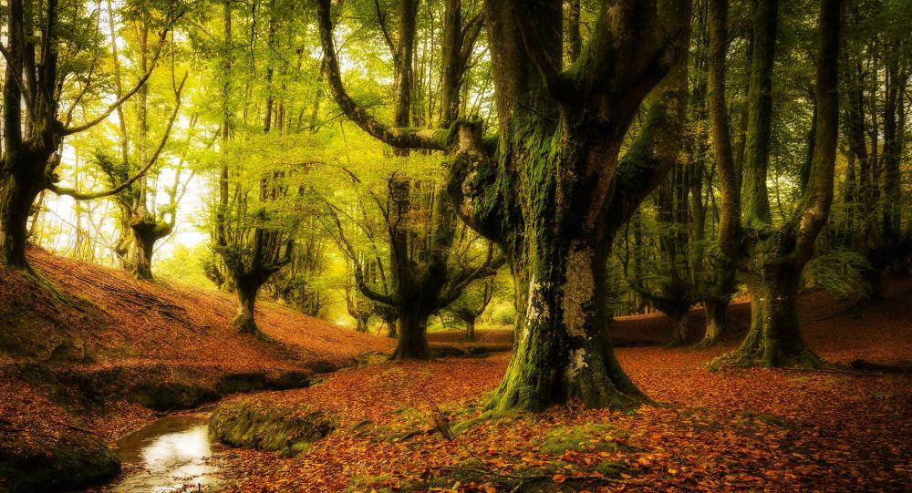 تعبیر خواب جنگل