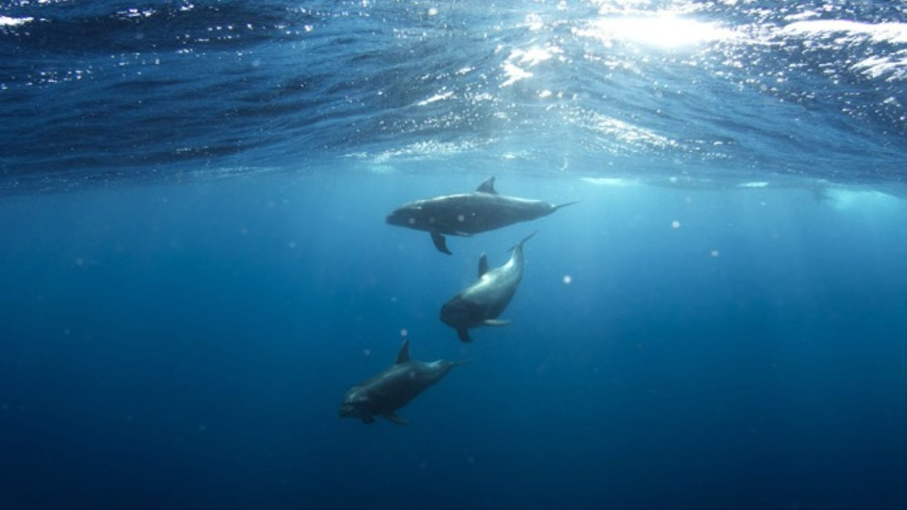 Photo of دانلود آهنگ مدیتیشن | دانلود آهنگ آرام بخش صدای دریا، نهنگ و دلفین برای مدیتیشن