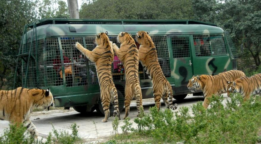 باغ وحش استانبول و آکواریوم های استانبول