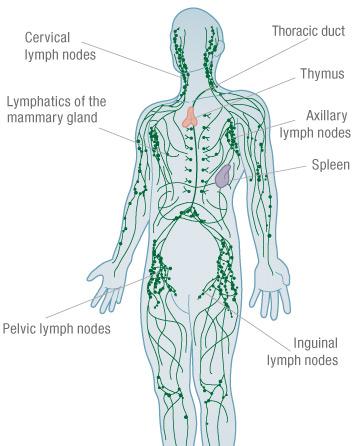 پاکسازی سیستم لنفاوی بدن