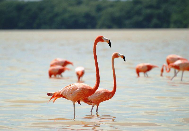 پرنده فلامینگو