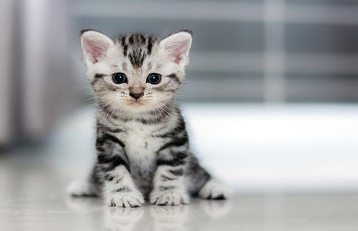 طرز تهیه غذای گربه