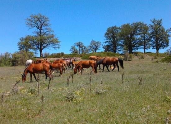 دیدنی های گرگان | مناطق زیبای طبیعی و گردشگری گرگان