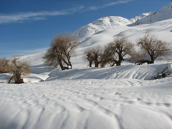 Photo of عکس طبیعت زمستانی + حقایق جالب و خواندنی در مورد فصل برف و سرما