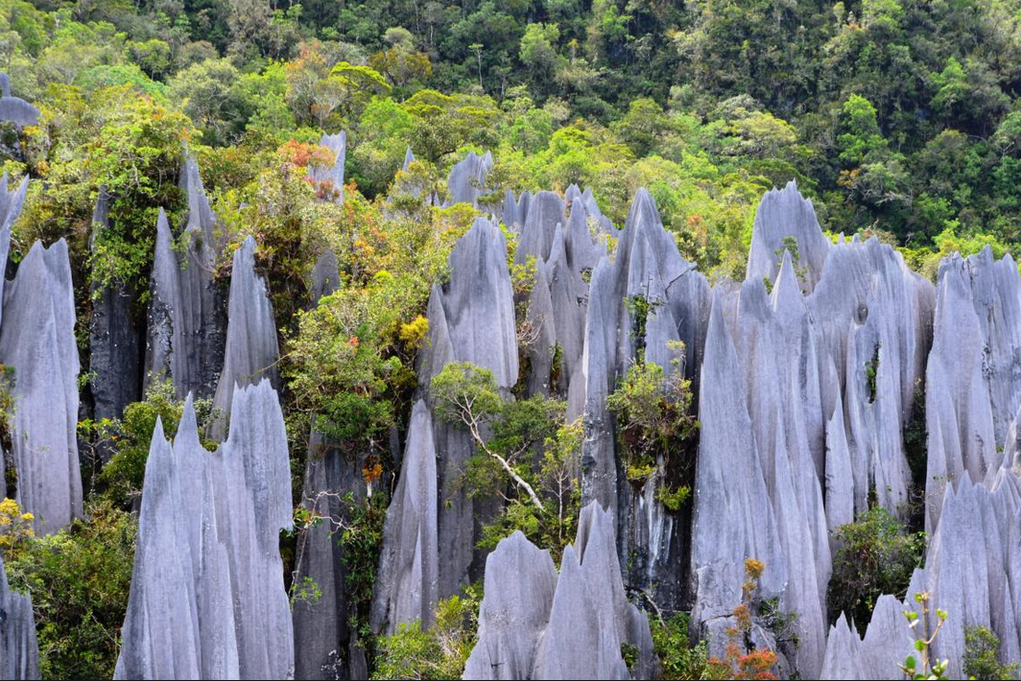 چهار جاذبه طبیعتگردی مالزی