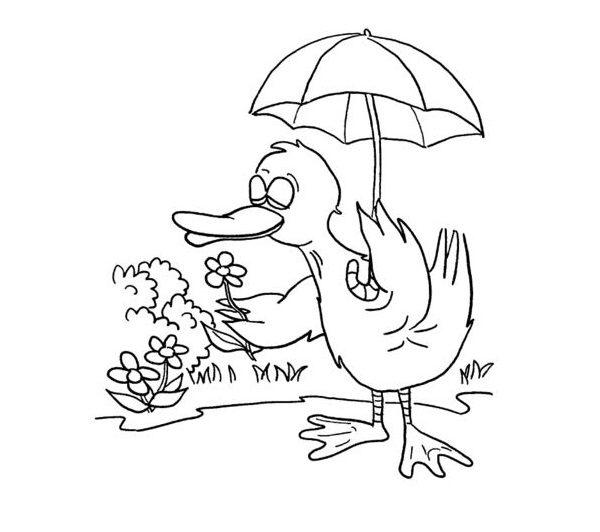 نقاشی اردک برای رنگ آمیزی کودک + طرح های آماده و زیبا برای رنگ کردن