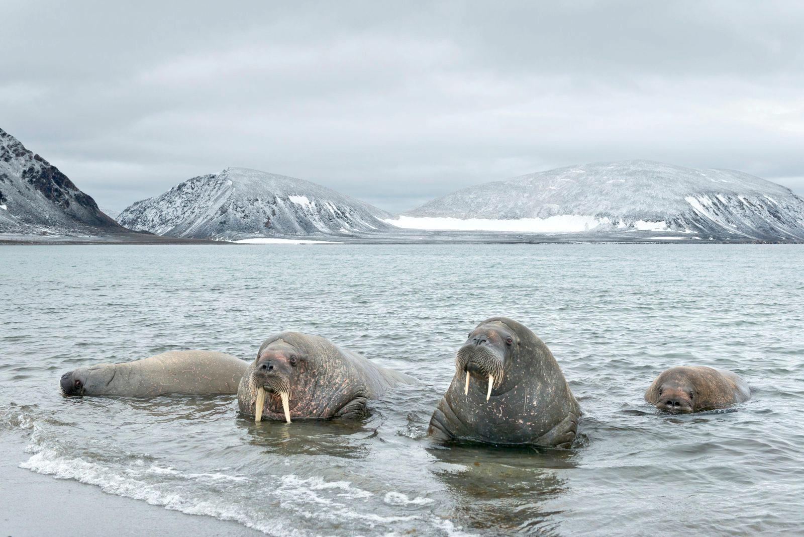 Photo of رازهای قطب شمال + اطلاعات خواندنی در مورد قطب شمال