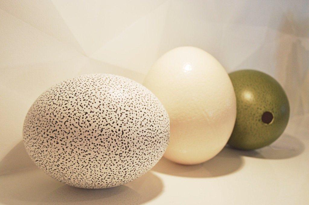 نقاشی تخم شترمرغ