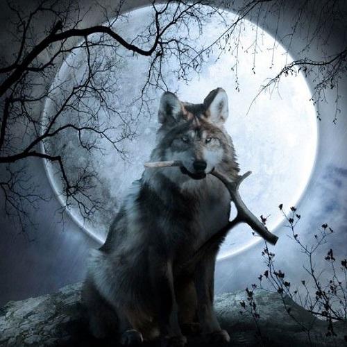 Photo of عکس گرگ و ماه + تصاویر زیبا از گرگ و ماه برای پروفایل