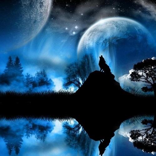 عکس گرگ و ماه