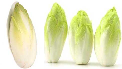 Photo of خواص آندیو یا تره فرنگی + کاربردهای دارویی و درمانی این گیاه