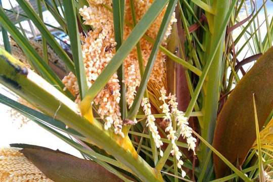 Photo of خواص طارونه + فواید دارویی عرق این گیاه برای سلامت