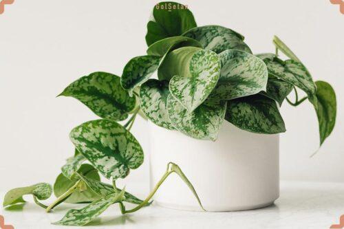 Photo of گیاهان تصفیه کننده هوا + معرفی 13 گل و گیاه های مفید برای فضای بسته منزل