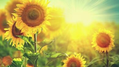Photo of انشا درباره فصل تابستان + 6 انشا با موضوع فصل تابستان و تعطیلات