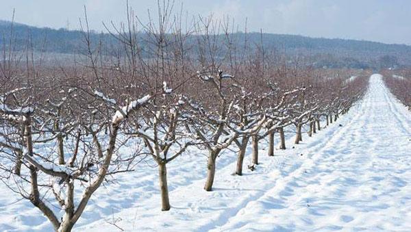 عکس پروفایل از برف زمستانی