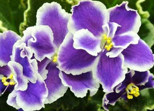 معرفی گیاهان مقاوم به سرما و گل های زمستان دوست