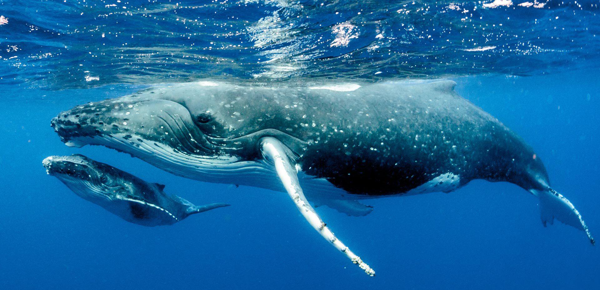 اطلاعات خواندنی در مورد نهنگ