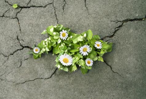 امید درمانی