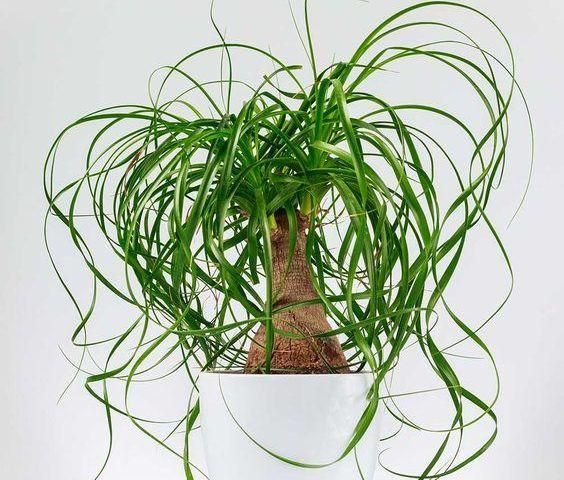 معرفی گیاهان مناسب برای آشپزخانه و ویژگی هر کدام از این گیاهان