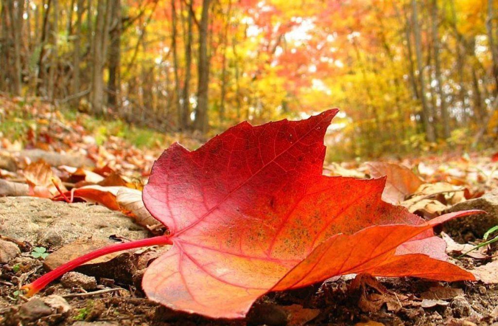 انشا موضوع پاییز