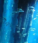 تصاویری از بزرگترین آکواریوم استوانه ای جهان