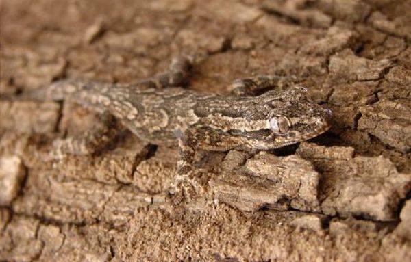 استتارهای دیدنی از حیوانات و حشرات