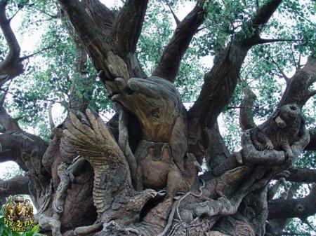 درخت عجیب