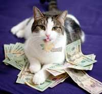 گربه ای که ۱۰ میلیون پوند از صاحبش به ارث برد ! + عکس