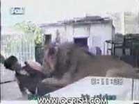 کلیپ وحشتناک حمله ناگهانی شیر به یک مرد