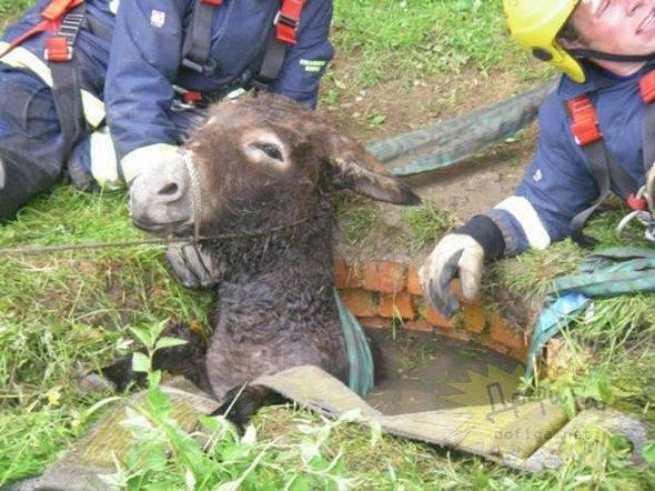 تصاویری جالب از حیوانات بدشانس