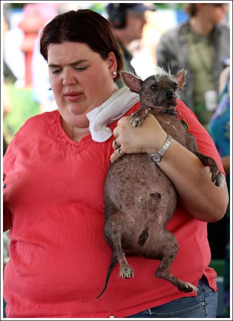 تصاویری از جشنواره زشت ترین سگ ها