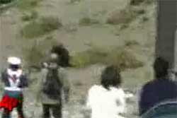 کلیپ حمله خرس