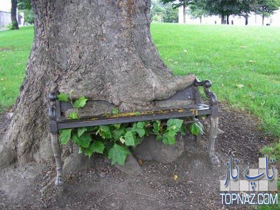 درخت هایی بسیار عجیب و جالب