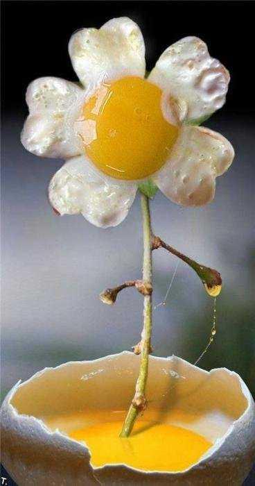 هنرنمایی بسیار جالب با مواد غذایی