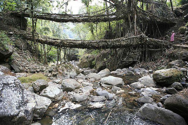 عجیبترین پلهای طبیعی