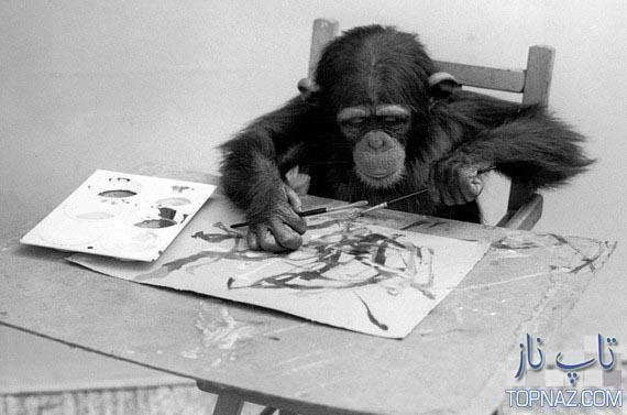 شامپانزه نقاش