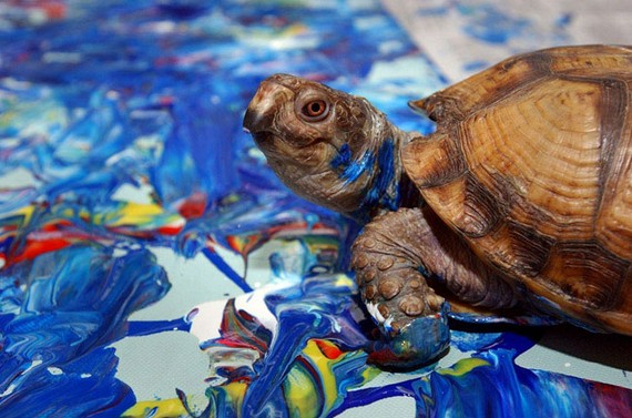 حیواناتی باهوش که با نقاشی مشهور شدند + عکس
