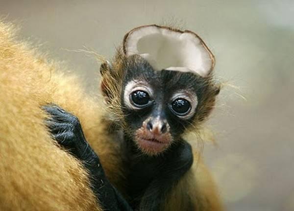 عکس حیوانات فوتوشاپی