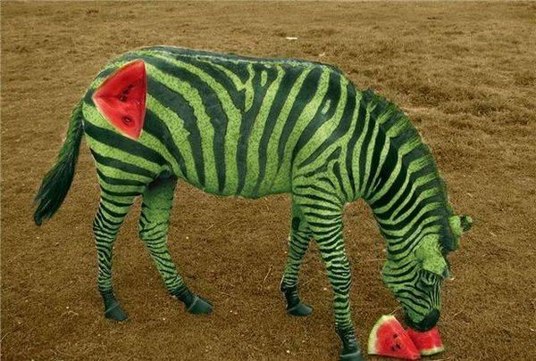 تغییر شکل جذاب و دیدنی حیوانات