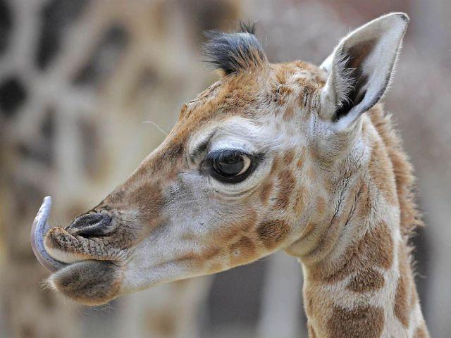 تصاویر زیبا و دیدنی از دنیای حیوانات