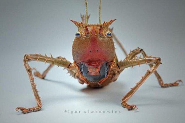 حشرات رنگی