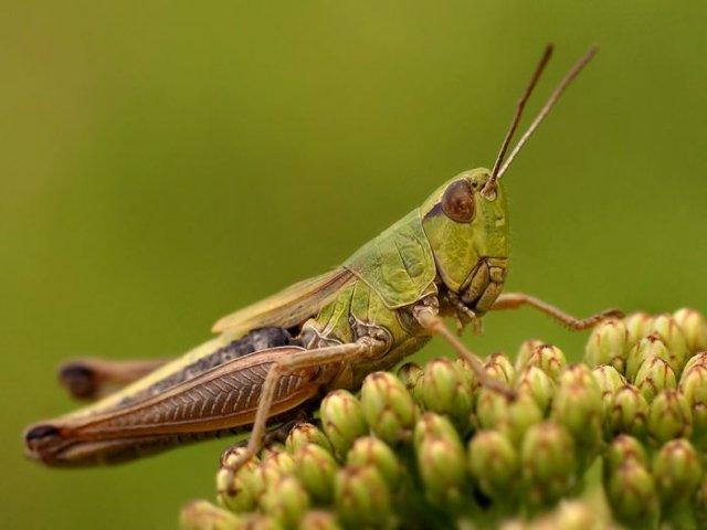 تصاویری جالب و با کیفیت از حشرات رنگی(13عکس)