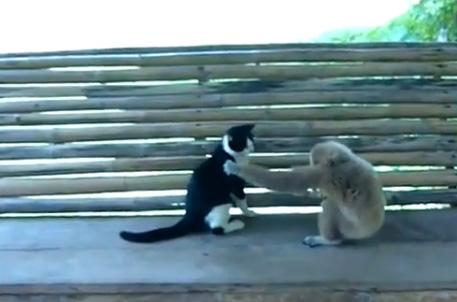 کلیپ آزار گربه توسط میمون شیطون