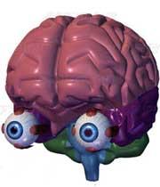 اطلاعاتی شگفت انگیز در مورد چشم انسان